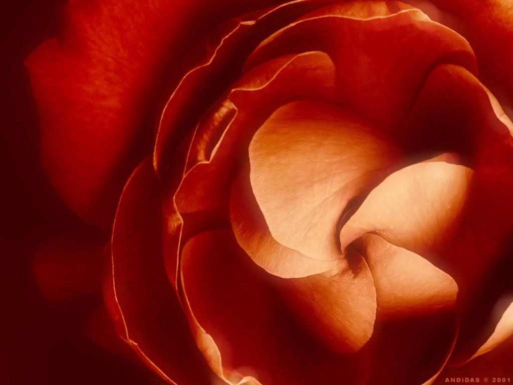 BloomingInTheDark by andidas