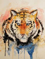 Tiger by IIIKatnissIII
