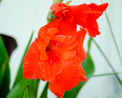 Flowers-10 by nielsphoto