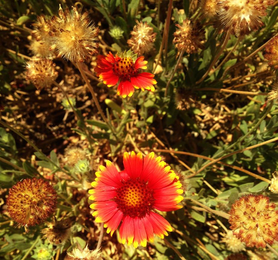 Orange Dew Flowers by Madkazer