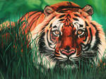Save the Tigers Save the World