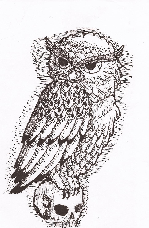 Owl drawings tumblr