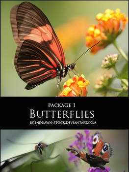 Butterflies package 1