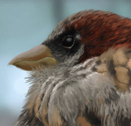 Bird Study Process by 2BeanSoup