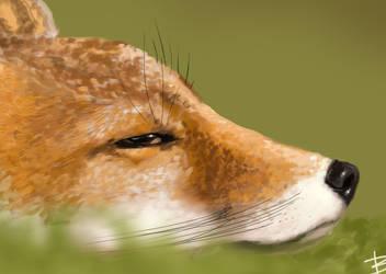Fox Study Process by 2BeanSoup