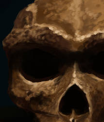 Skull Study Process by 2BeanSoup
