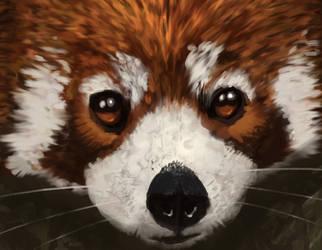 Red Panda Study Process by 2BeanSoup