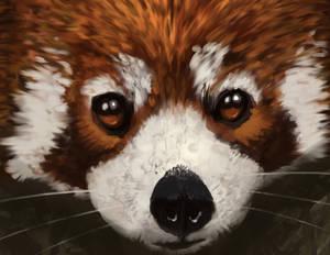 Red Panda Study Process