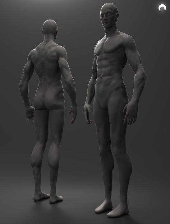 Male Anatomy FREE Download by fumanshooh on DeviantArt