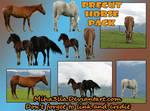 Horse precut png _stock