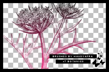 hv botanics brushes by haudvafra