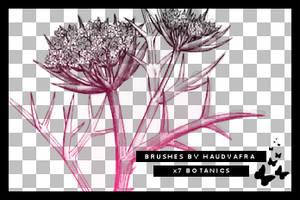 hv botanics brushes