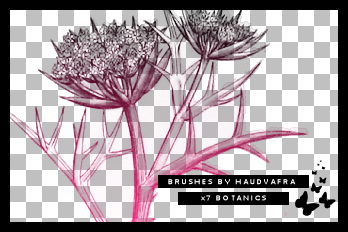 hv botanics brushes by haudvafra