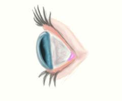 Human Eye by KILLYSART