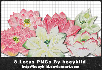 8 Lotus PNGs By heeykiid