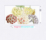 5 Flower Pngs By heeykiid