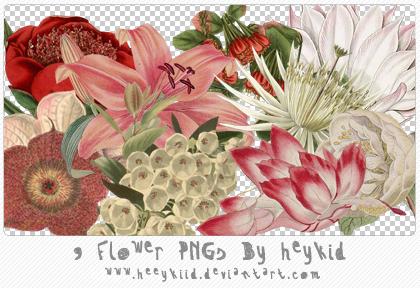 9 Flower PNGs By heykid by heeykiid