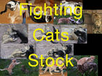 Fighting Cat Stock Package