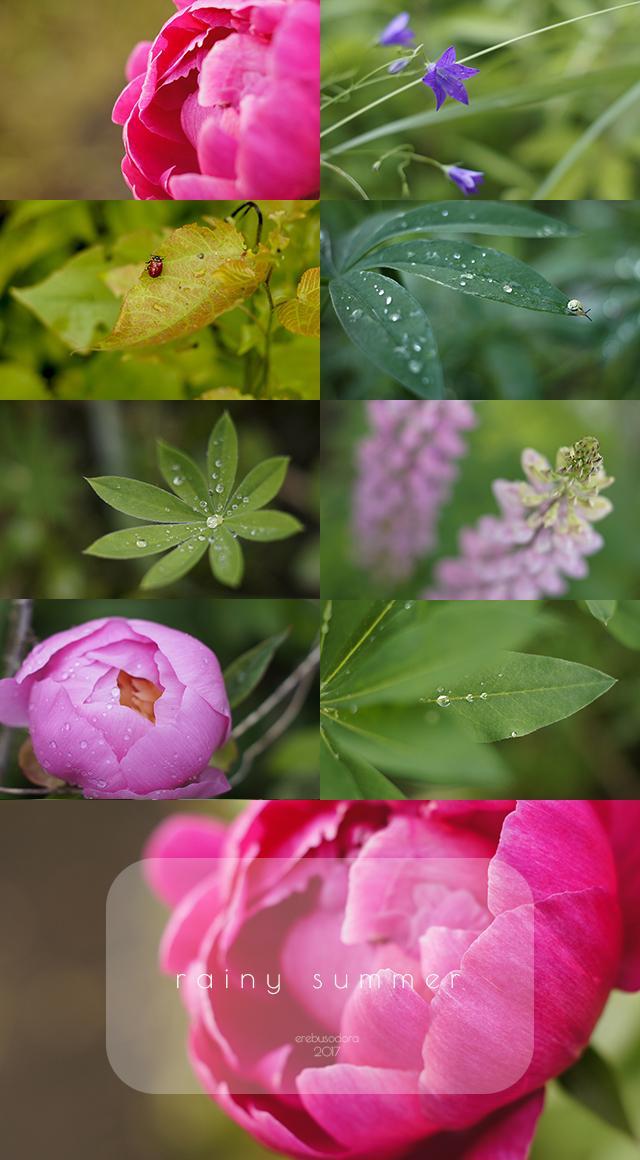 rainy summer '17 by erebus-odora
