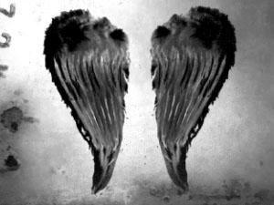 Pretty Wings by PrettyBrush