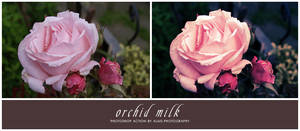 action: orchid milk by alais-stock