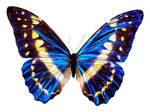 Butterfly BXP27796