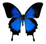 Butterfly BXP27798
