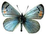 Butterfly BXP27799