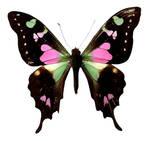 Butterfly BXP27803