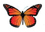 Butterfly CB067741