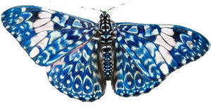 Butterfly LP004932