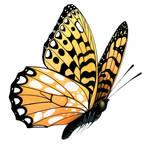 Butterfly 42-18115910