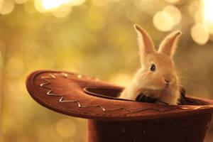 Magical hat ...
