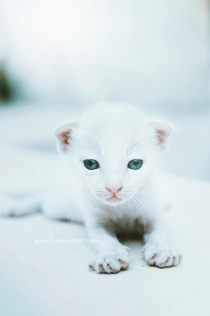 Snow ... by aoao2