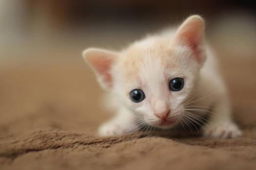 Kitty Stock ...