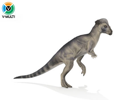 Pachycephalosaurus Walking Cycle Animation