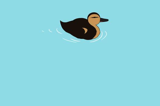 Swimming Duck Animation