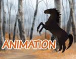 YHH Animation