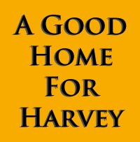A Good Home For Harvey by brothejr