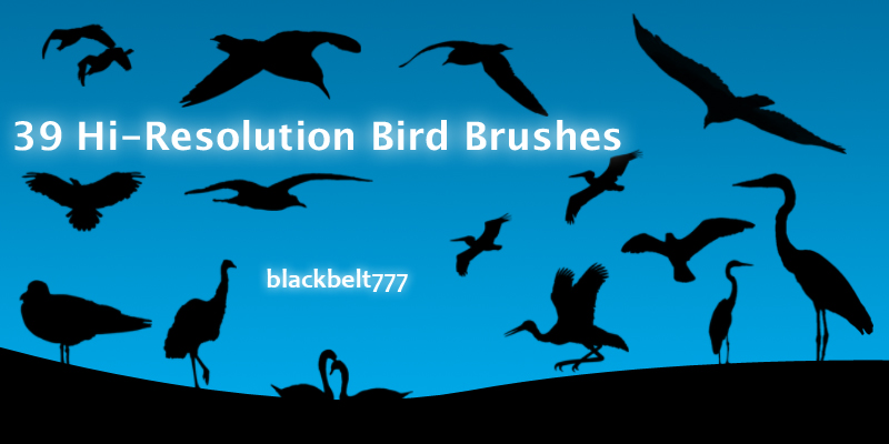 Hi-Res Bird Brushes