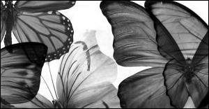 Butterflies-Photoshop 7.0 by shades-of-grace