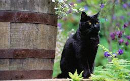 .cat. by babi-nuru