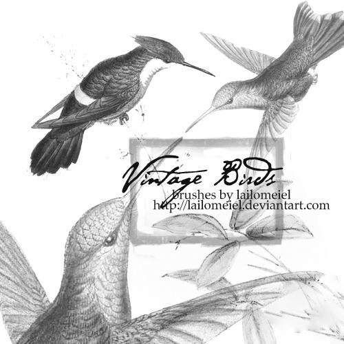 Vintage Birds by lailomeiel