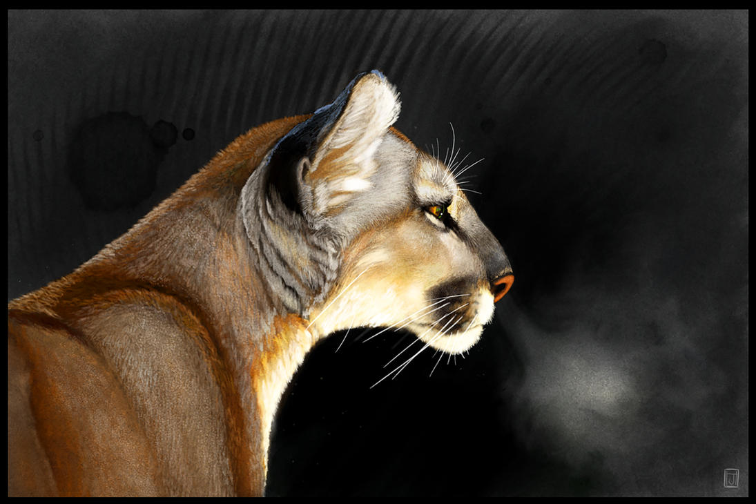 Cougar Intensity Sketchbook Mobile Tutorial by ArtofJeffHebert