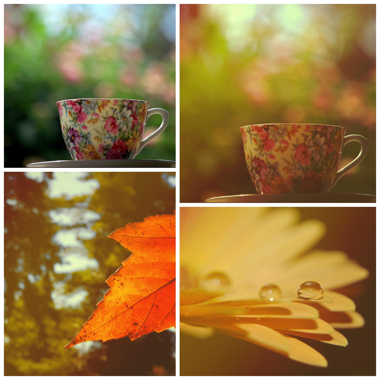 Autumn action by Bokehlie