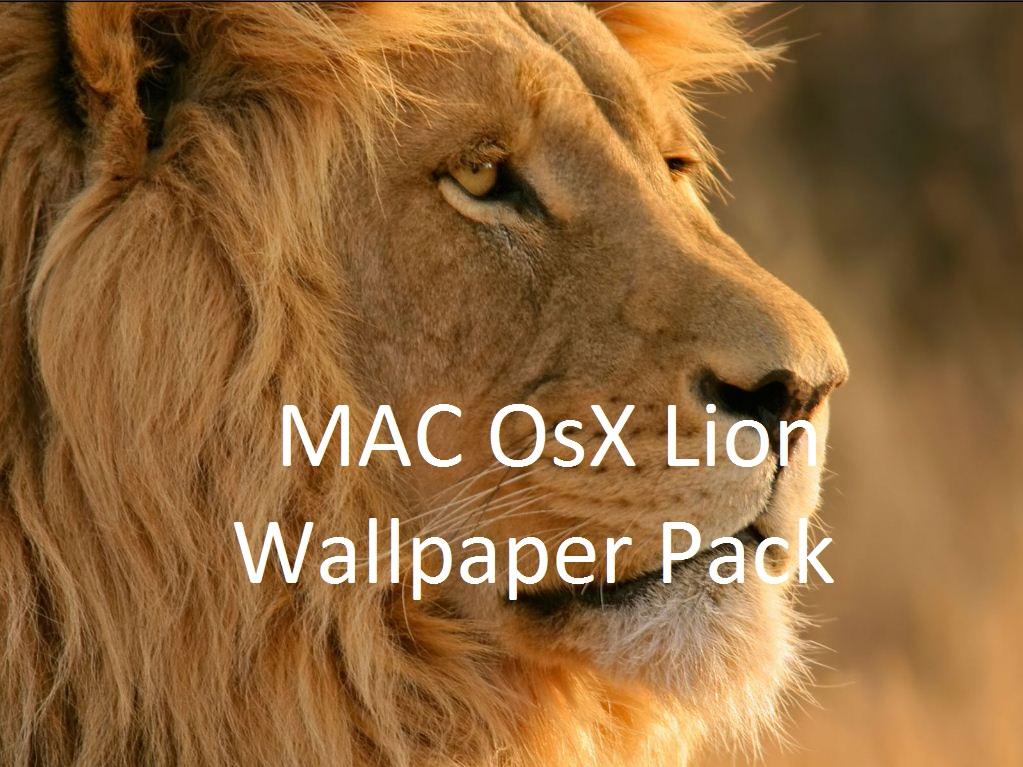 Lion wallpaper hd, lion wallpaper hd, lion wallpaper hd 1080p