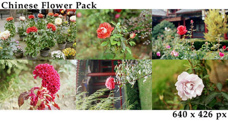 Chinese Flower pack