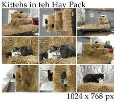 Kittehs in teh Hay Pack
