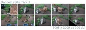 Random Cats Pack 1