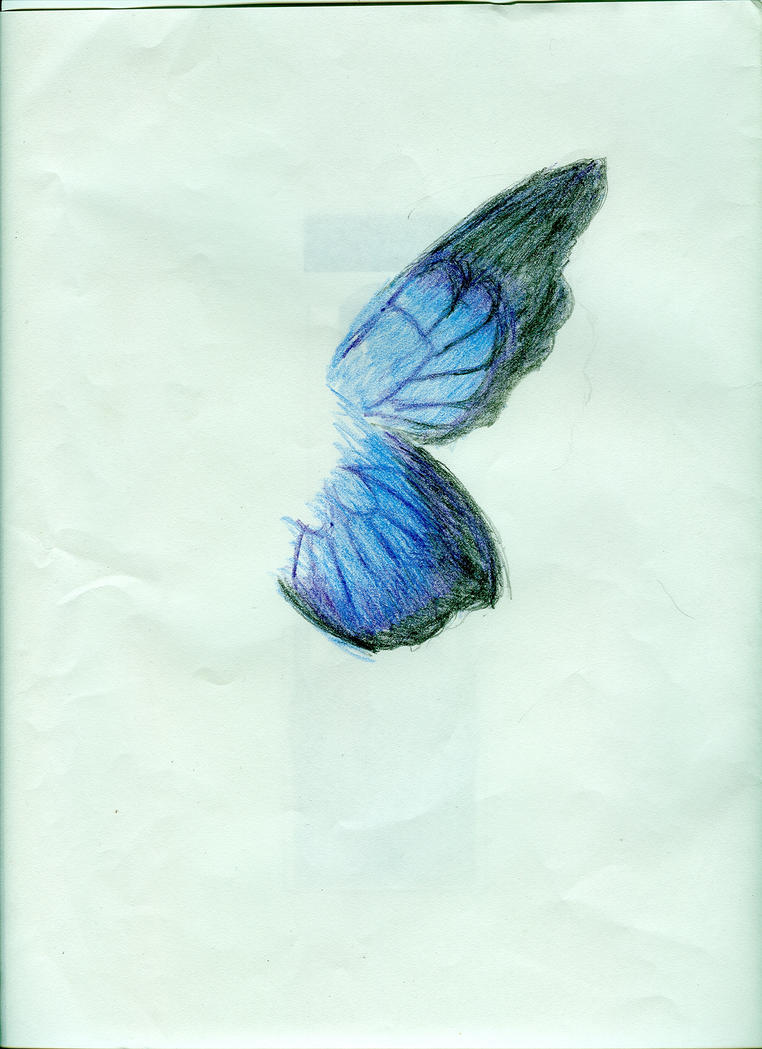 A butterfly wing color pencil by zigzagvee on DeviantArt